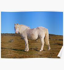 Dartmoor: All White Now Poster