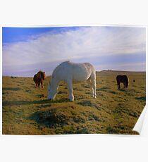 Dartmoor: Ponies on White Tor. Poster