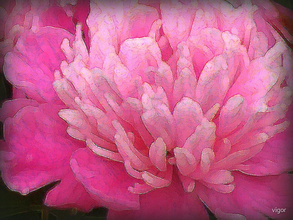 pink peony by vigor