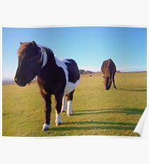 Dartmoor: Ponies on Boulters Tor. Poster