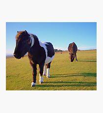 Dartmoor: Ponies on Boulters Tor. Photographic Print
