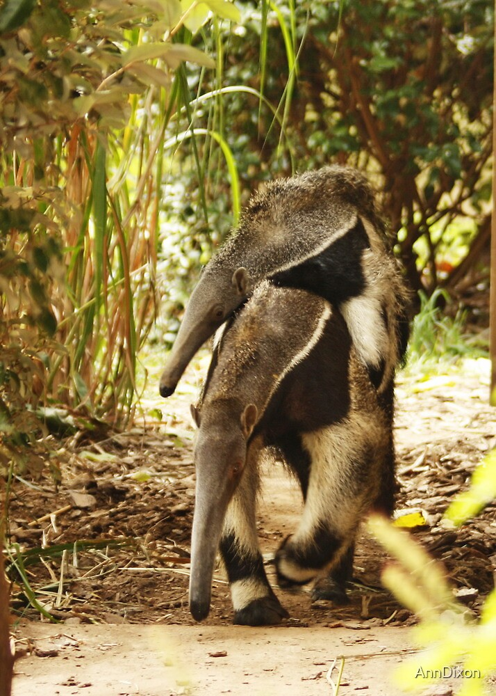 Quot Mom Amp Baby Giant Anteater Quot By Anndixon Redbubble