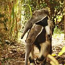 Mom & Baby Giant ANTEATER by AnnDixon