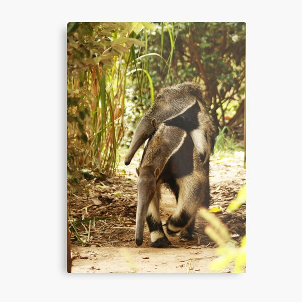 Mom & Baby Giant ANTEATER Metal Print