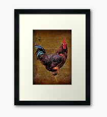 A Country Rooster Framed Print