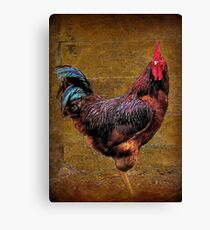 A Country Rooster Canvas Print