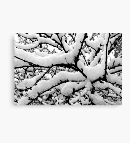 winter tree abstract Canvas Print