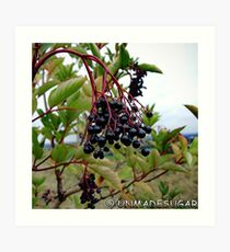 Dull Day Berries Art Print