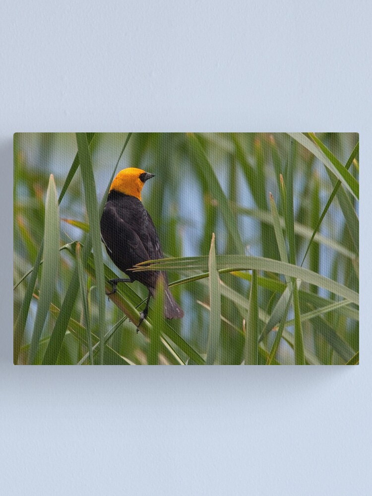 Alternate view of A Good Reed Canvas Print