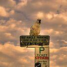 Polly Want A Ticket - Cockatoo, Avalon Beach Sydney by Philip Johnson