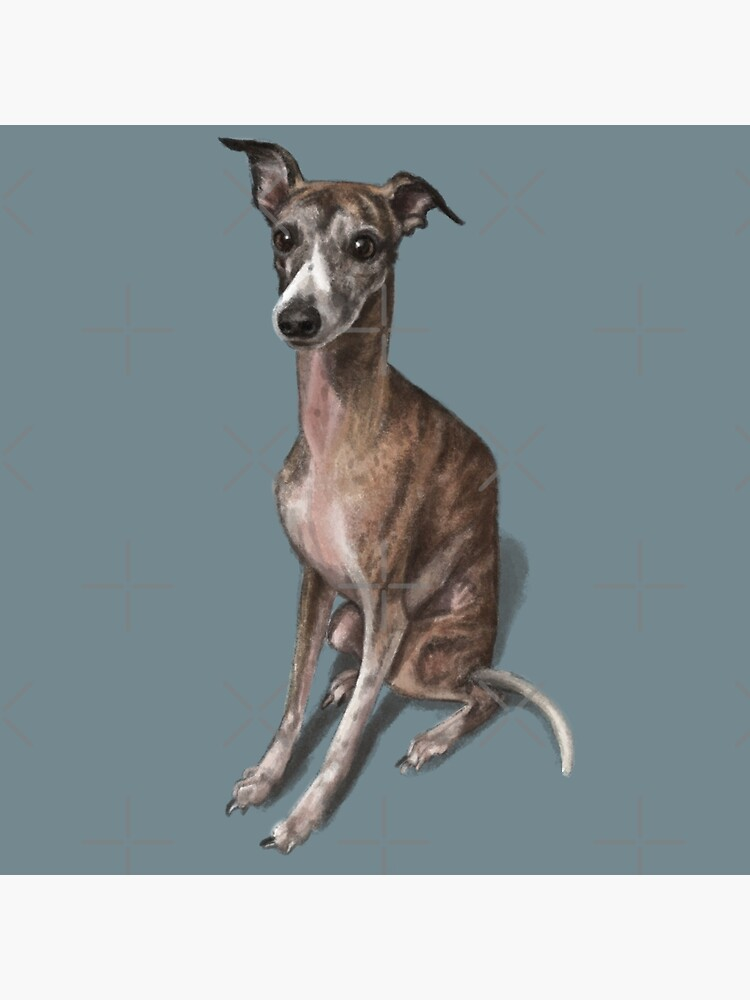 The Whippet by elspethrose