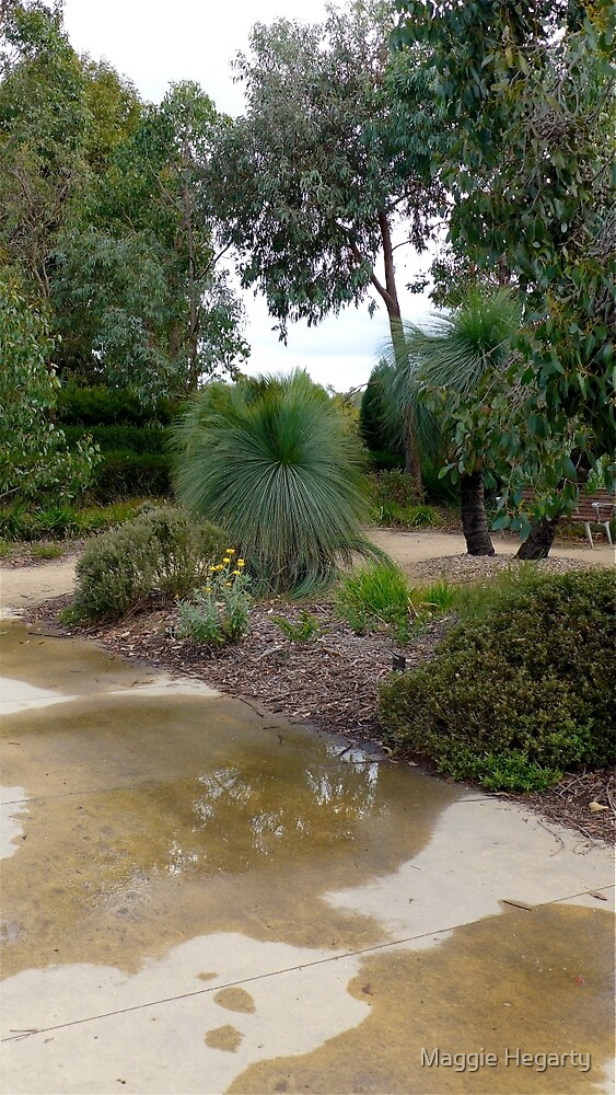 After the rain, Cranbourne by Maggie Hegarty