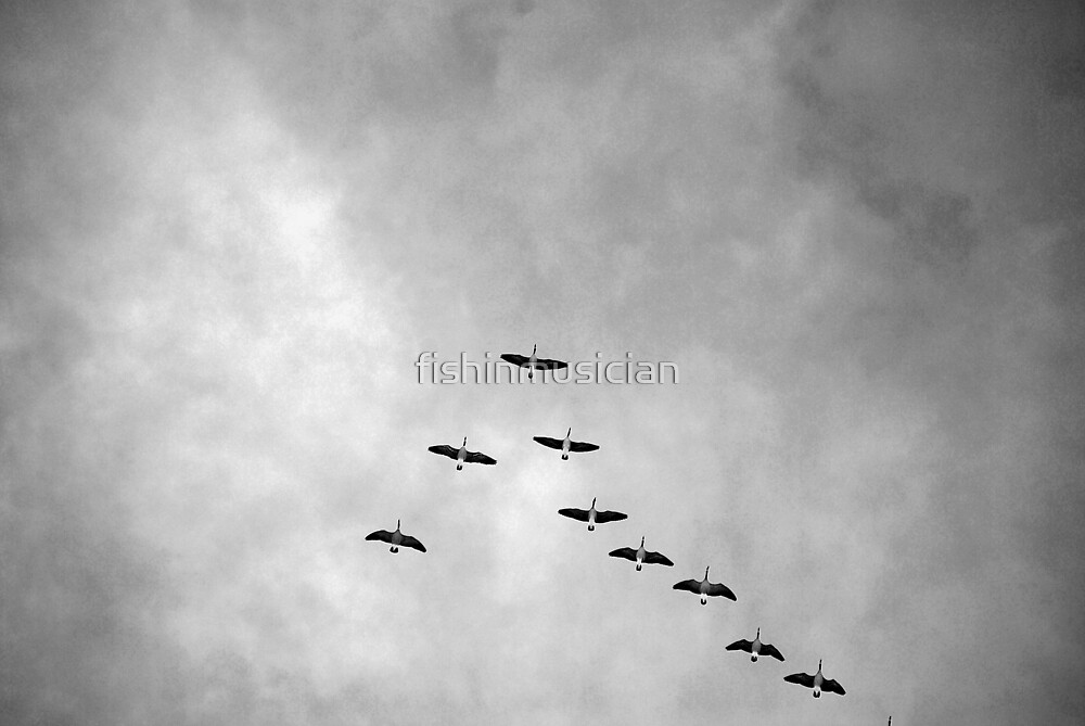 flying in formation by fishinmusician