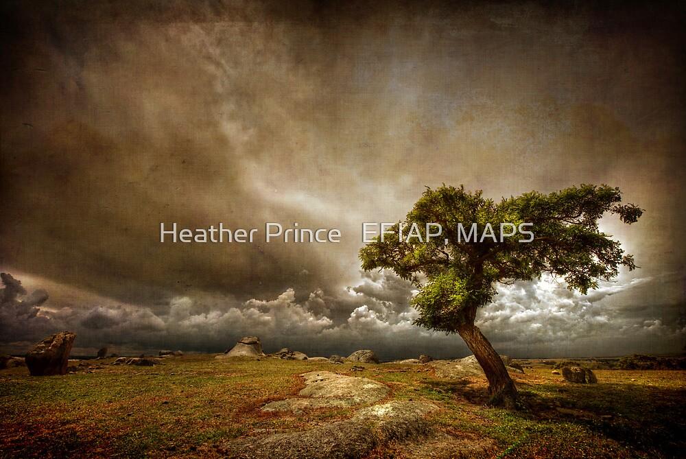 Dog Rocks by Heather Prince