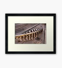 Curve of the Quill Framed Print
