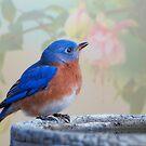 Mr. Bluebird, you make me happy! by Bonnie T.  Barry