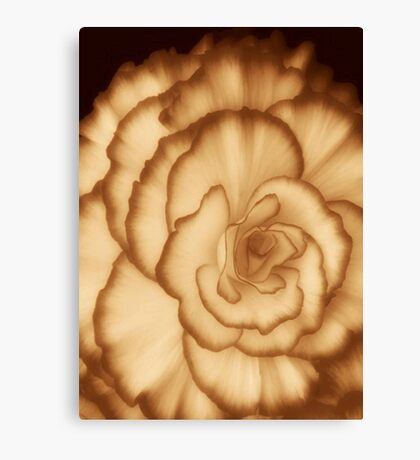 Carmel Cream ©  Canvas Print