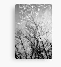 Nothing Written in the Sky Canvas Print