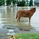 Jijaws St, Sumner Park, Qld floods 2011 by Tim  Geraghty-Groves