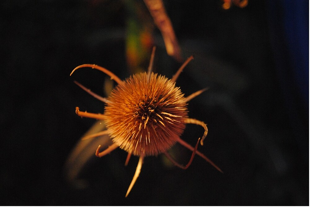 Spiky! by Keledora