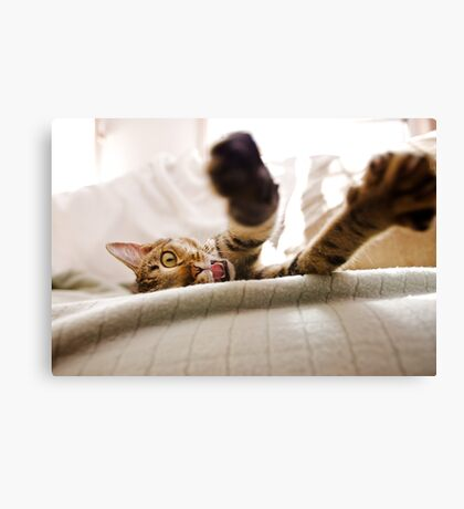 Kitty Stretch Canvas Print