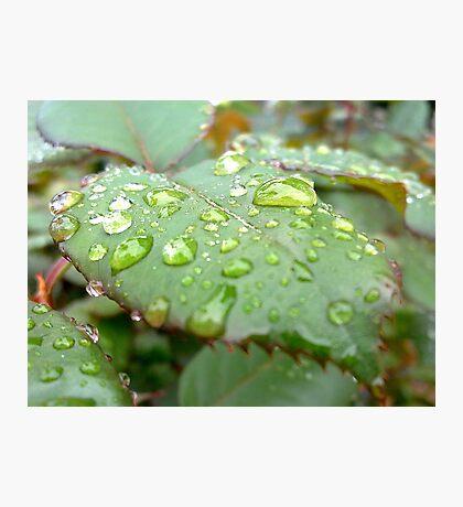 Rain drops like tears Photographic Print