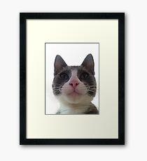 Gracie Kitty Framed Print