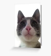 Gracie Kitty Greeting Card