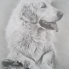 Golden Retriever by Peter Lawton