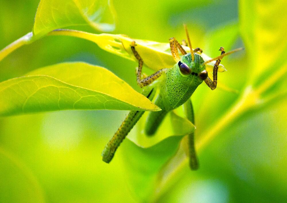 Patience, Grasshopper by satori80