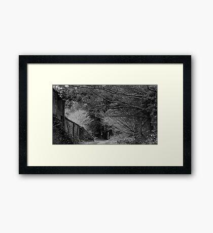 Woodland Walk Framed Print