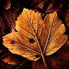 Gold Leaf by James Coard
