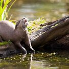 The Jolly Otter by Peter Denness