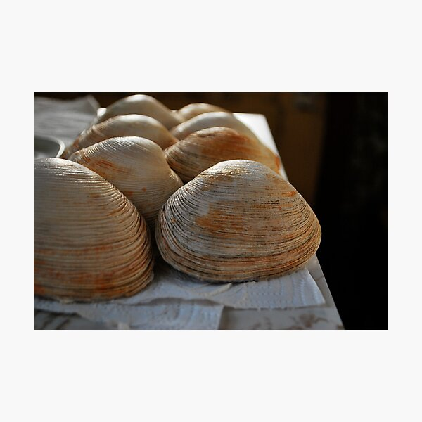 Line of shells  Photographic Print