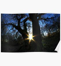 Silhouetted tree Poster