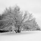 Snowcovered Tree by Michael  Dreese