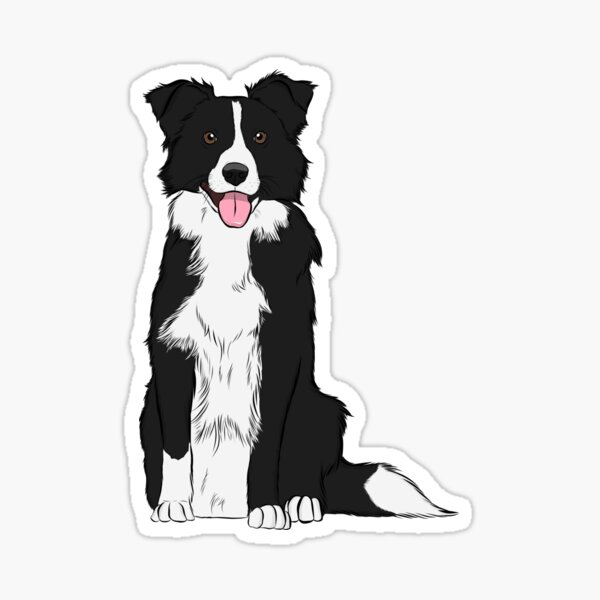 BORDER COLLIE GIFT PRESENT BLACK AND WHITE BORDER COLLIE LARGE CUSHION AND COVER