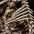 Bones by Guy Carpenter