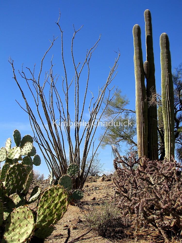 Nature's Cactus Garden by Kimberly Chadwick