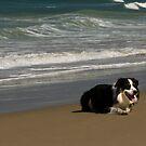 Beach Dog  by Jenny Dean