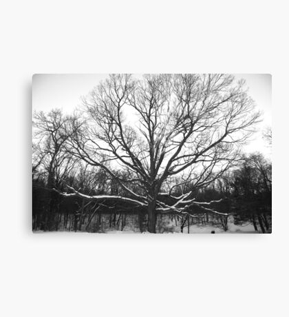 Ghost of Winter Canvas Print