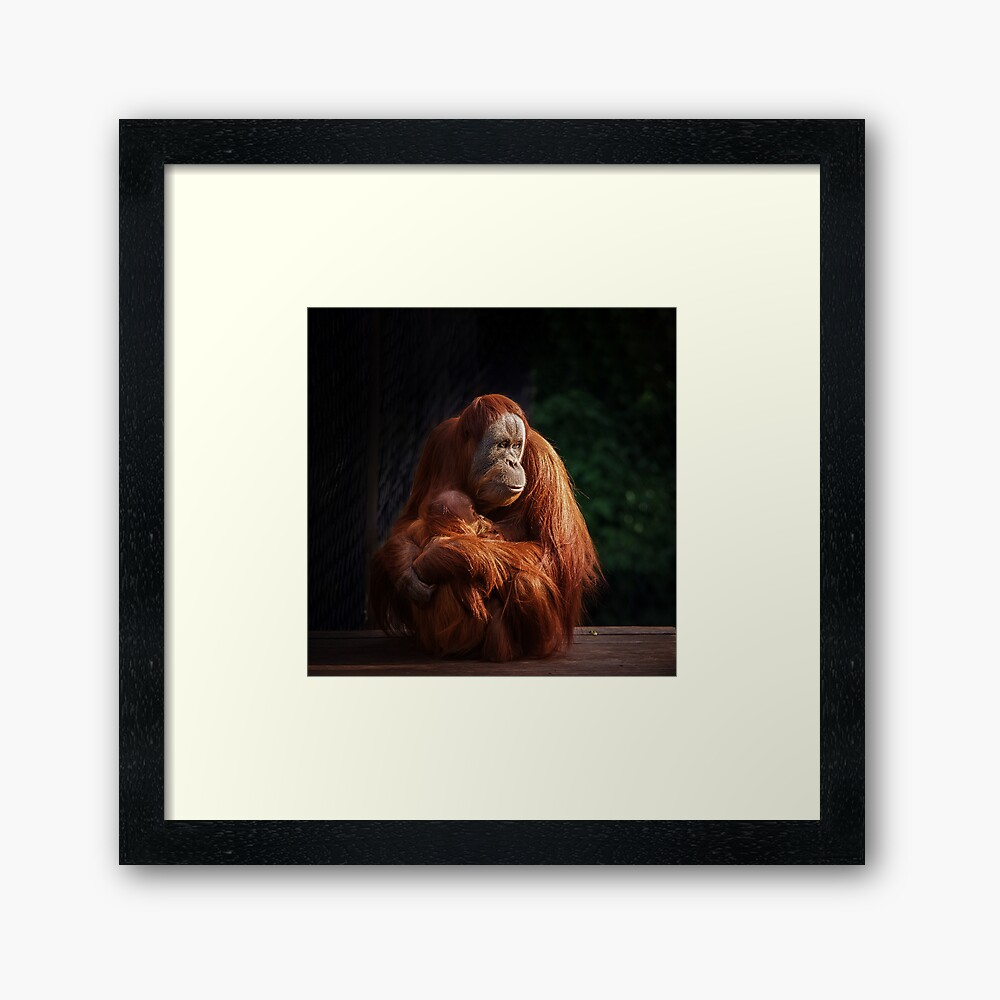 Dinner Time  Framed Art Print