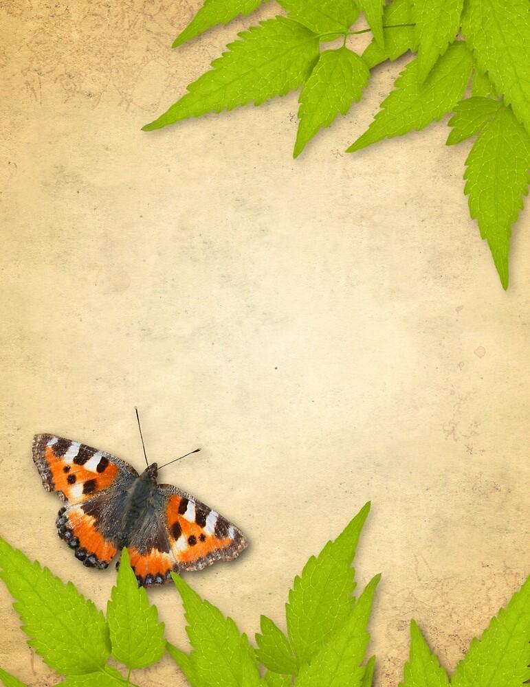 Butterfly by mfreeburn