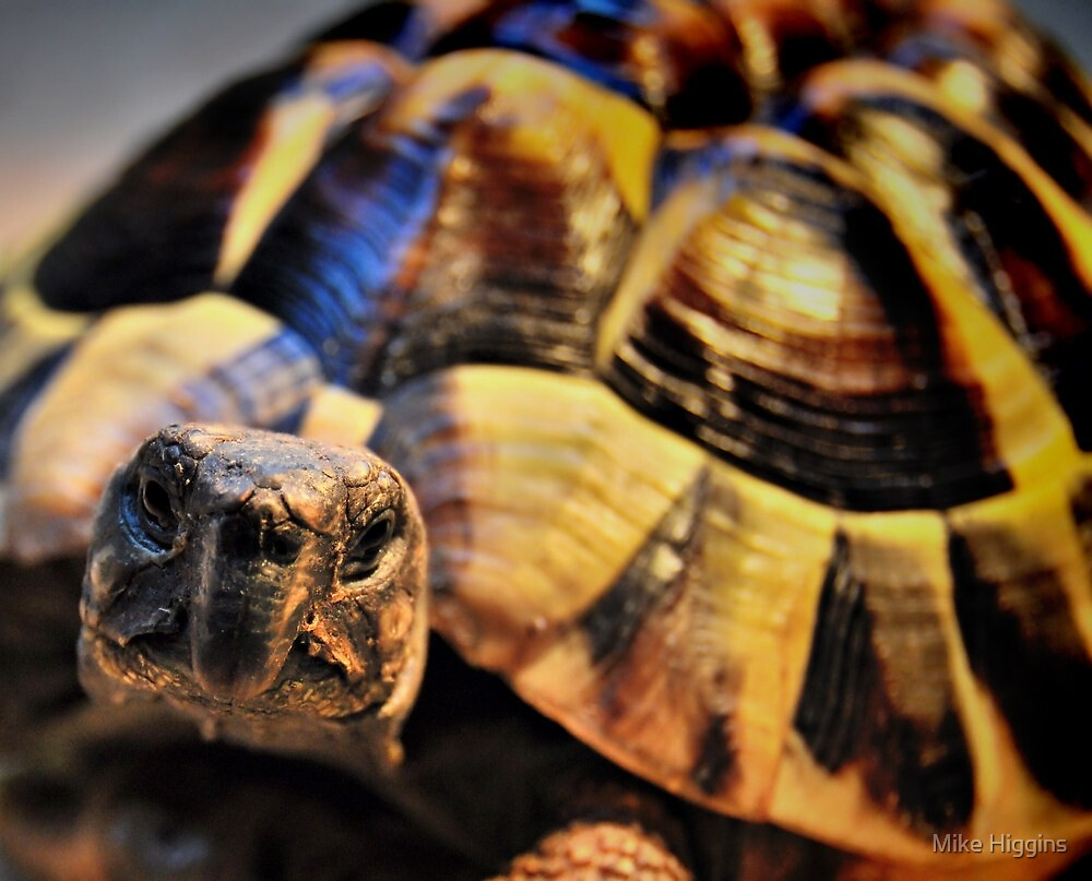 Tortoise by Mike Higgins