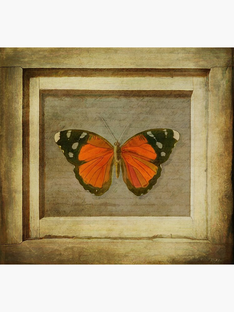 Butterfly in a Frame by KeithHawley