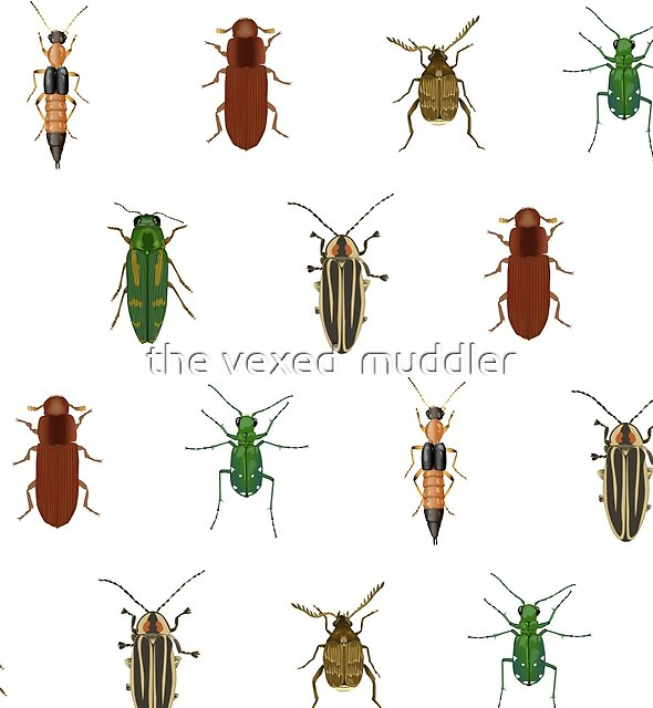 Four Beetles by the vexed  muddler