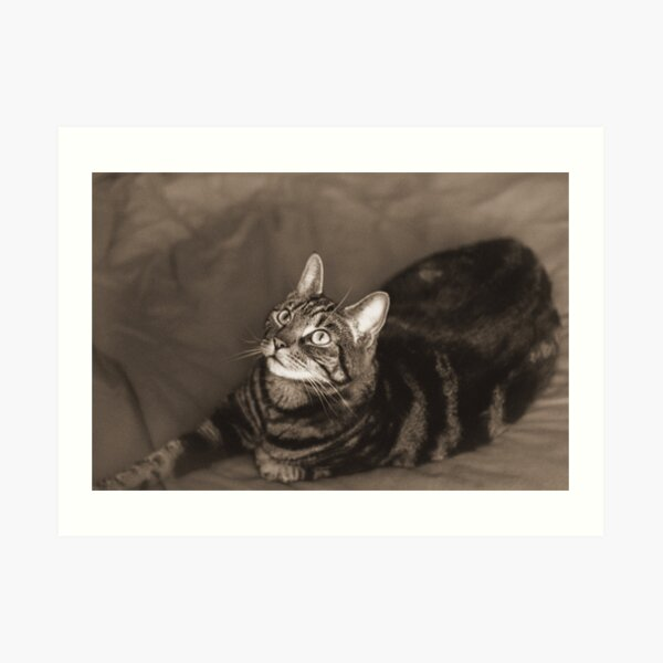 Vintage-Style Cat Photography Sepia Art Print