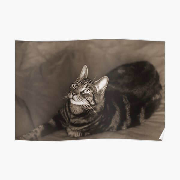 Vintage-Style Cat Photography Sepia Poster