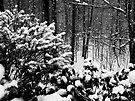 Winter Wonderland  by Marcia Rubin