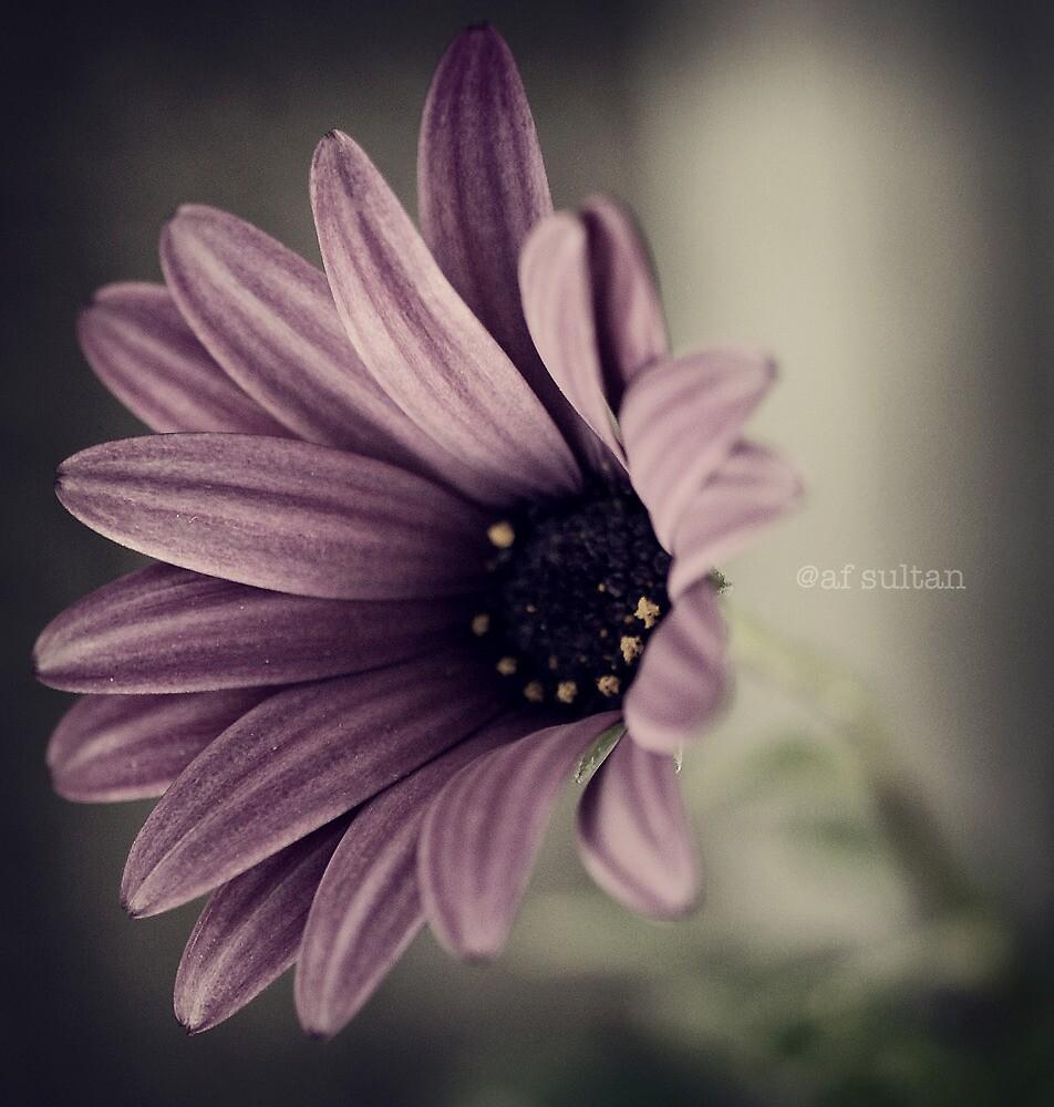 Purple by aftan